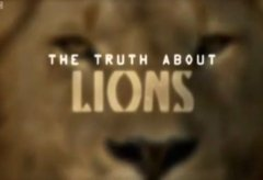 The Truth About Lions: The End of the Road? [2/2]