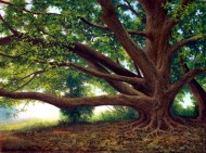 JMK_Grandmother Tree (c) copyright protected