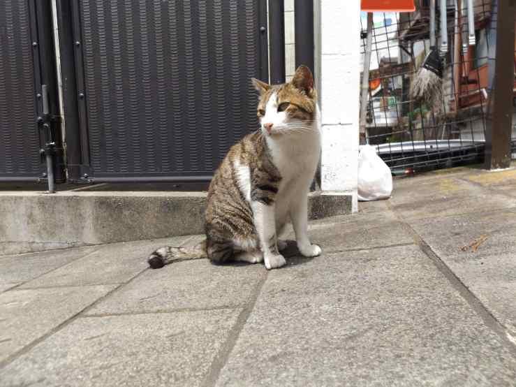 straycat.jpg