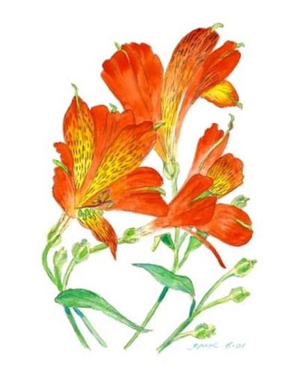 Alstroemaria - Watercolor - 10 x 14 inches