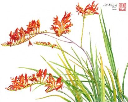 Firecracker_Flower