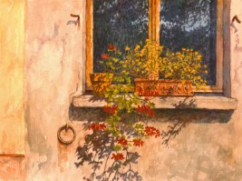 Geraniums, Via Cresperone - Watercolor - 11 x 16 inches