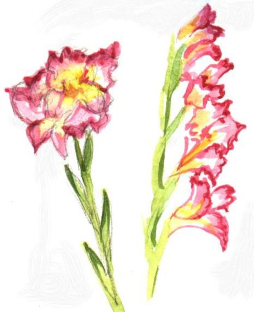 Gladiolus Study - Watercolor - 7 x 10 inches