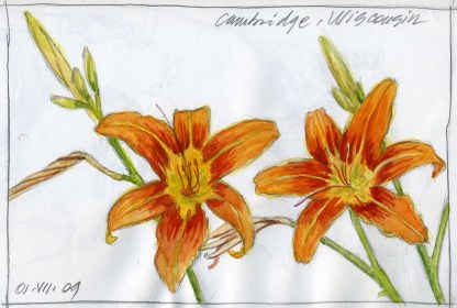 Two Lilies - Watercolor - 7 x 11 inches