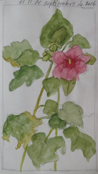 Hollyhocks 1 - Watercolor - 5 x 7 inches