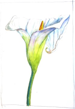 A Lily - Watercolor - 8 x 11 inches