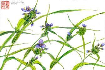 Spiderwort - Watercolor - 10 x 14 inches
