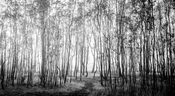 The Nature Walk