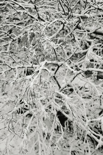 snow in Mount Macedon 24