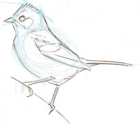 How to start a bird sketch