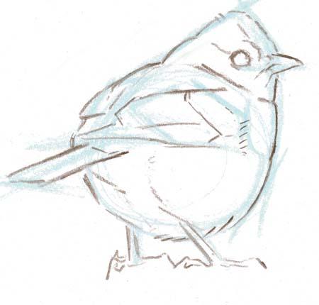 bird sketch 2