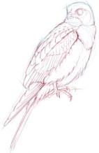 falcon chest 2