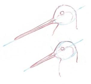 shorebird heads 2