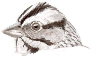 sparrow head patterns