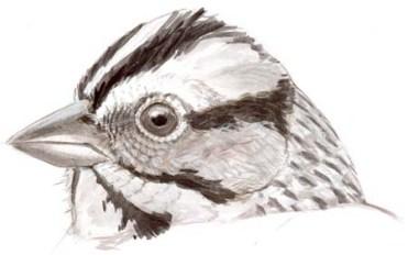 sparrow head patterns