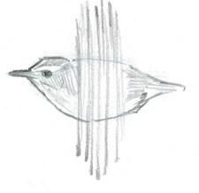 wren flight