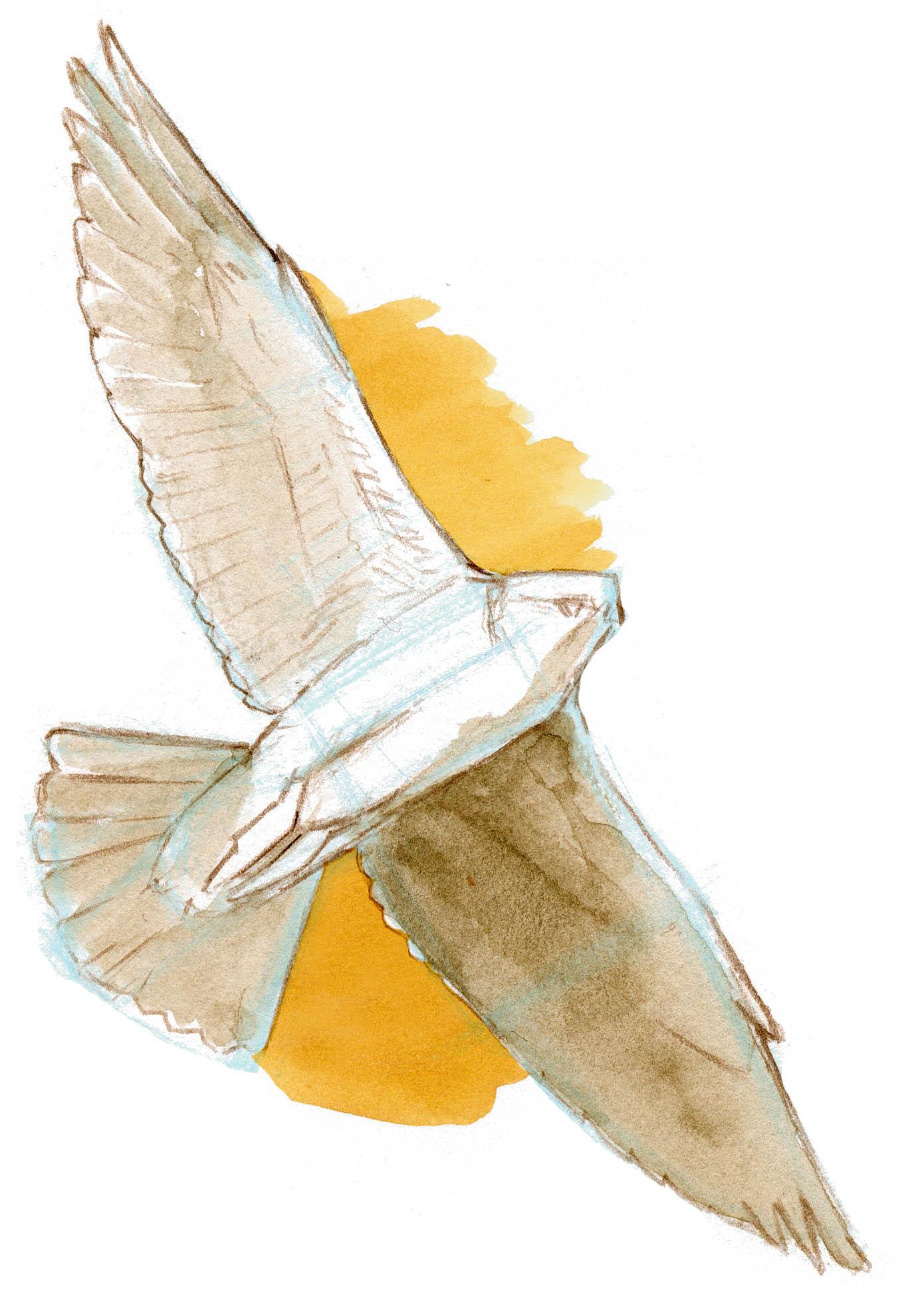 Negative shapes on bird in flight