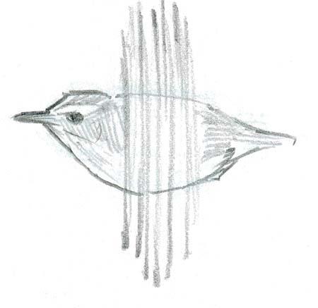 How To Draw Birds in Flight