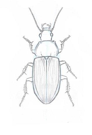 Beetle legs 1