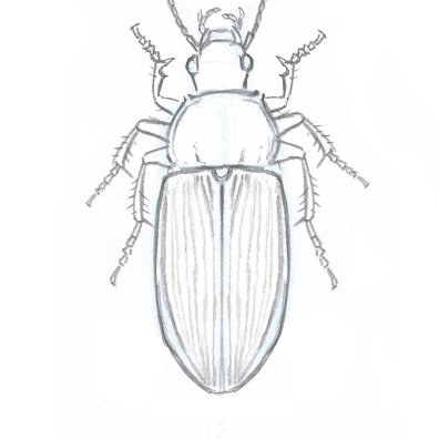 Beetle legs 2