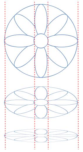 Foreshortening Disk-shaped Flowers