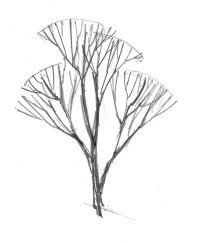 Connect the branch units to a central trunk that widens as you go down.
