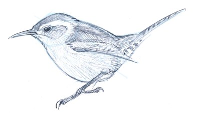 Suggest the planes and values of the bird with contour shading. Note how the line direction changes from the mantle (back) feathers to the scapular feathers.