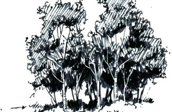 aspen grove 11