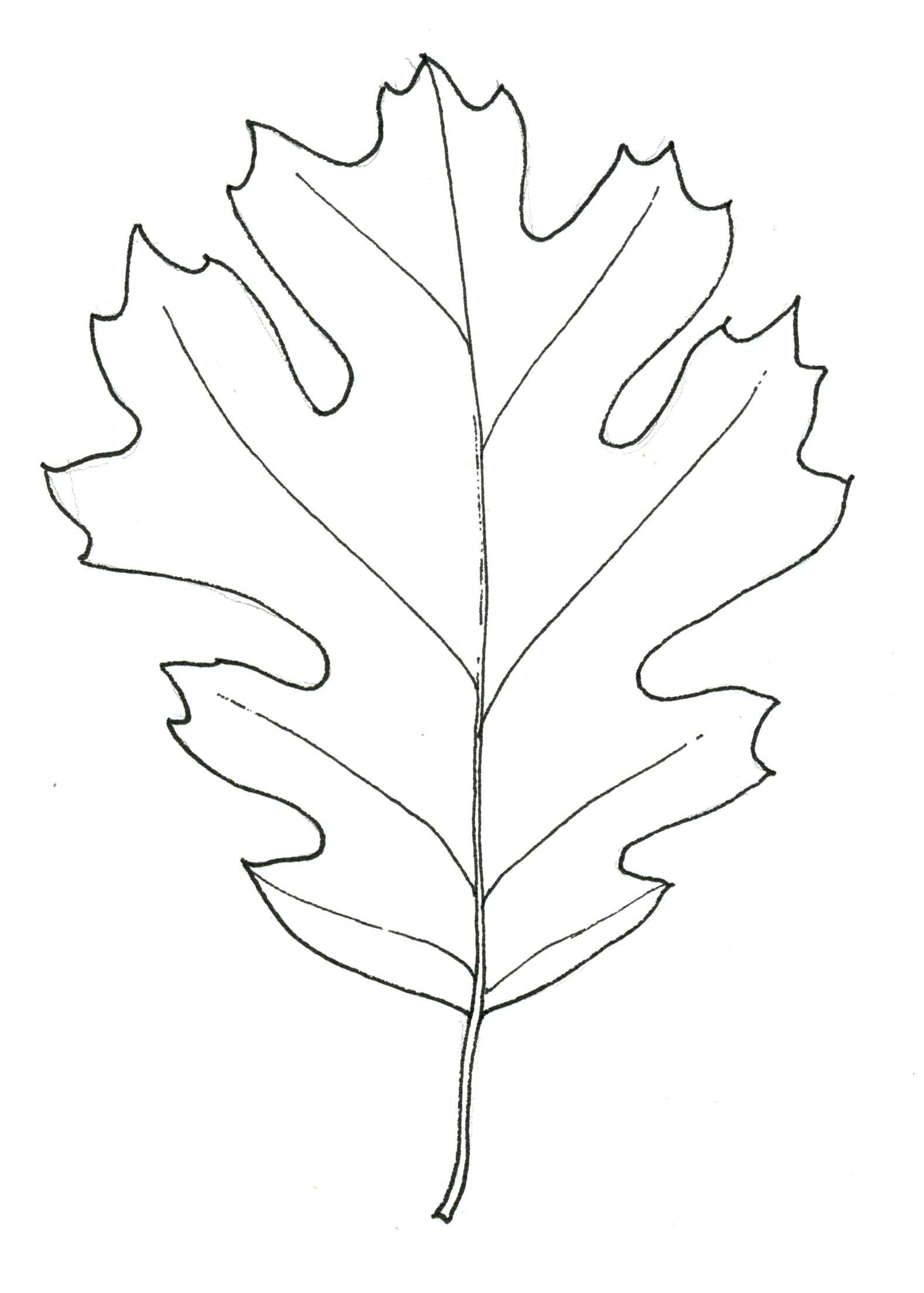 Black Oak Leaf Stippleboard 3