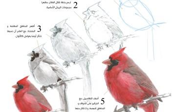 Drawing Birds in Arabic