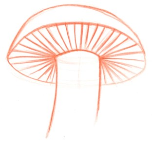 how to draw a mushroom easy