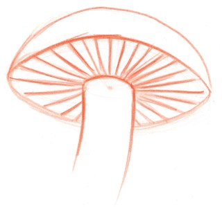 Right: All the gills point to the dot at the center of the cap. Look carefully at the angle of the gills on the back side of the mushroom. If you were to continue these lines into the stalk, they would converge at the dot.