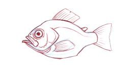 Adipose fin: A small fleshy, rayless fin on trout, salmon, catfish and characins.