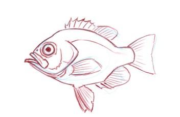 morph a fish 27