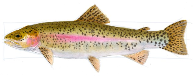 Add spots to the fins. Note that the spots form lines instead of being randomly placed.