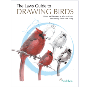 drawing-birds