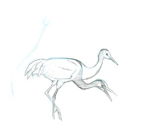Now, distant cranes begin calling and the bird begins walking away. Start a new drawing there on the same page.