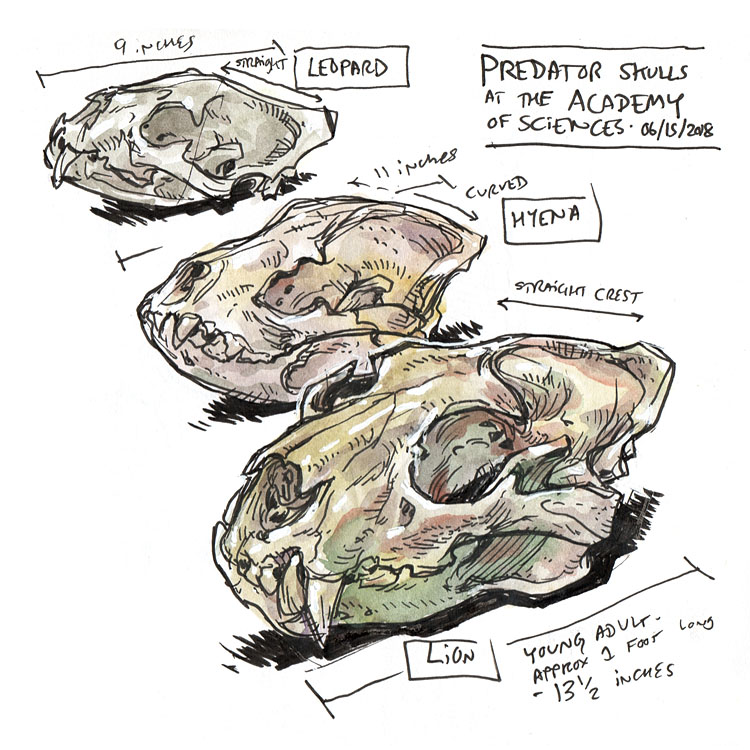 Sketching Skulls & Bones with Mark Simmons (video)