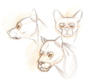 The 3/4 view started out dog like but started looking more cat-like so I turned it into a lion. Notice the change of the nose shape and a large cat chin.