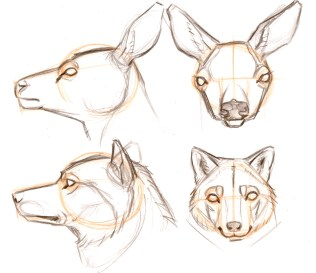 The line of the jaw runs from the base of the ear, down and under the head. Practice drawing heads with necks to help you get the angles behind and under the head.