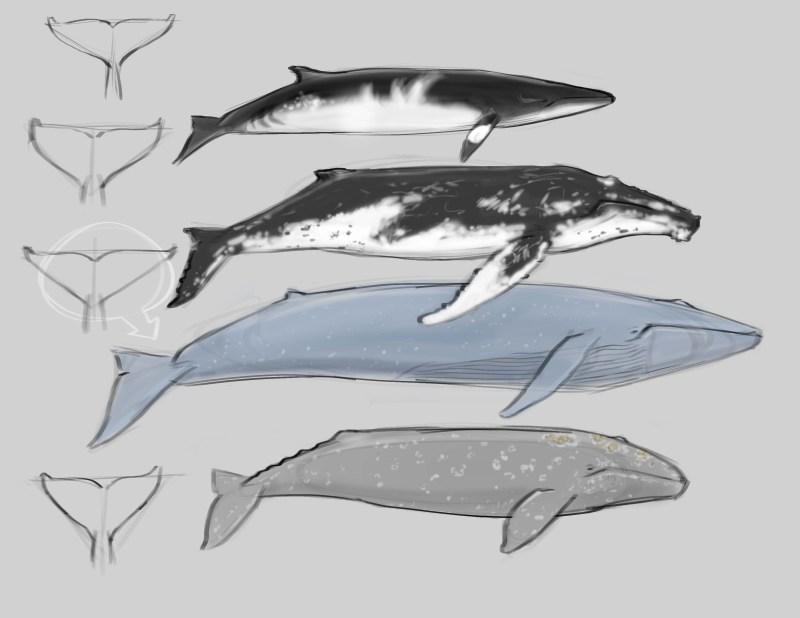 Drawing Fish Archives - John Muir Laws