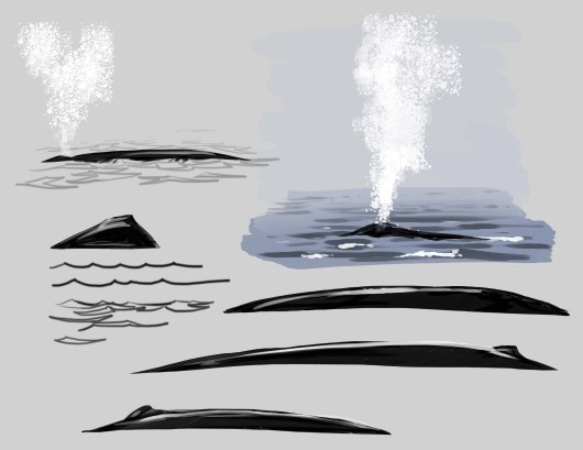 Now make the bottom edge of the whale irregular. Now we are talking whale in water!