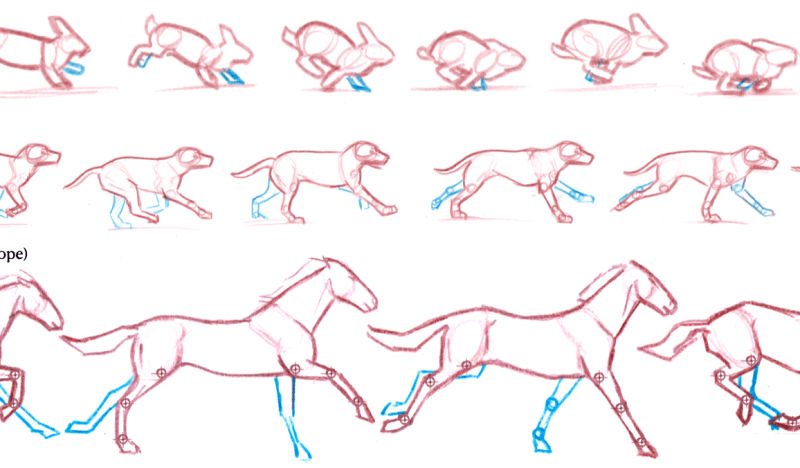 Drawing Mammal Gaits: Walk and Trot (video)