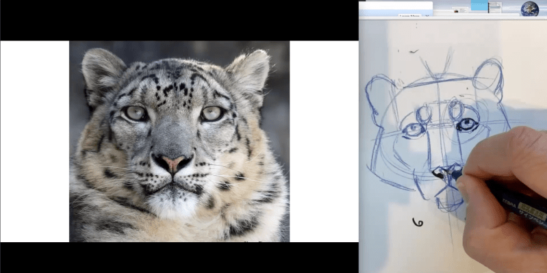 Snow Leopards, Art and Conservation