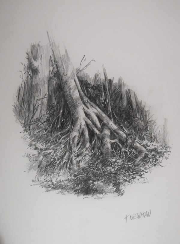 Pencil Drawings Forest Floor