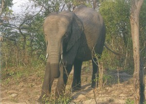 Chamilandu