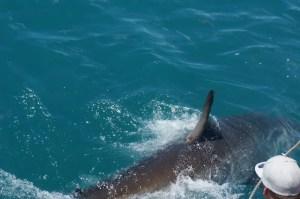 Closeup shot of the shark
