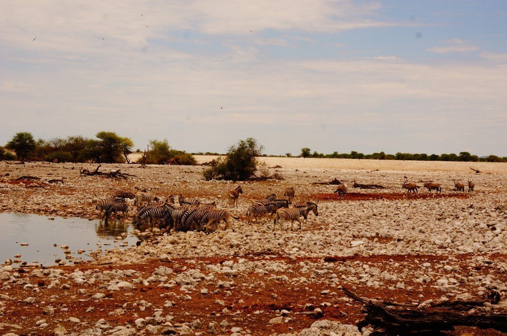 Etosha National Park Watering hole