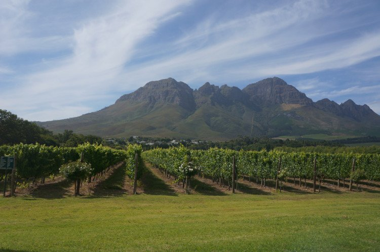 We could have driven straight to Cape Town and did wine farms another day but we were already here . . .