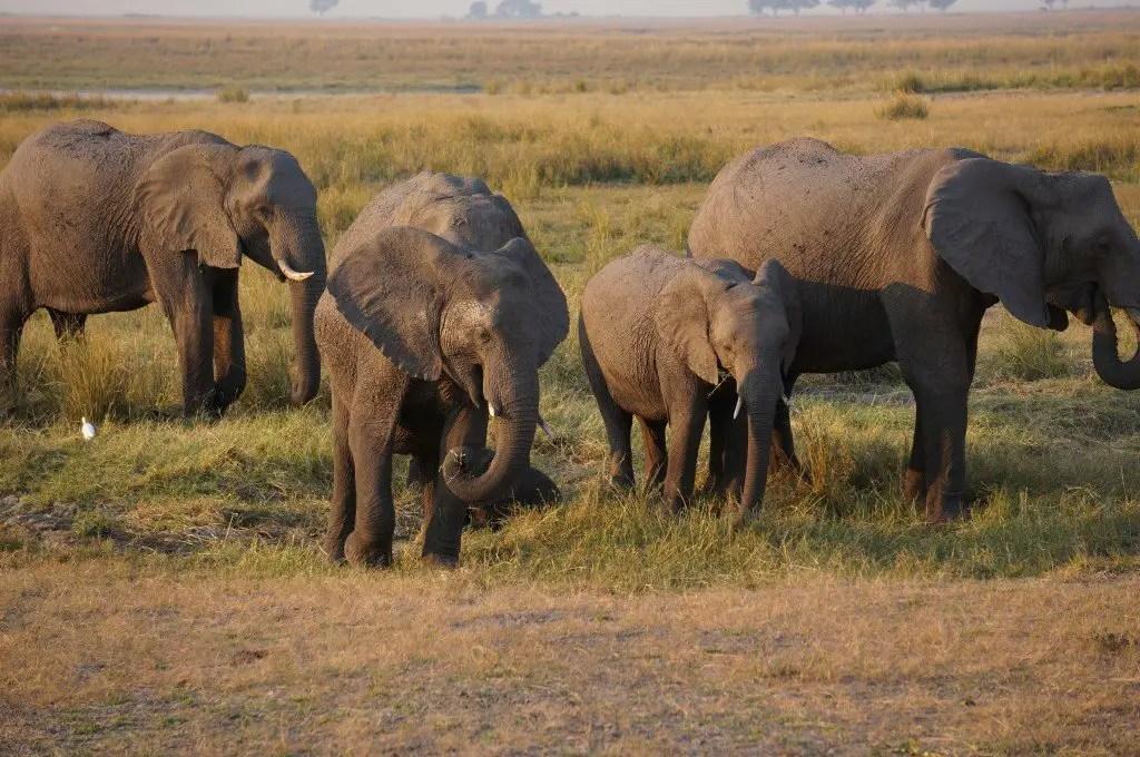 More elephants!